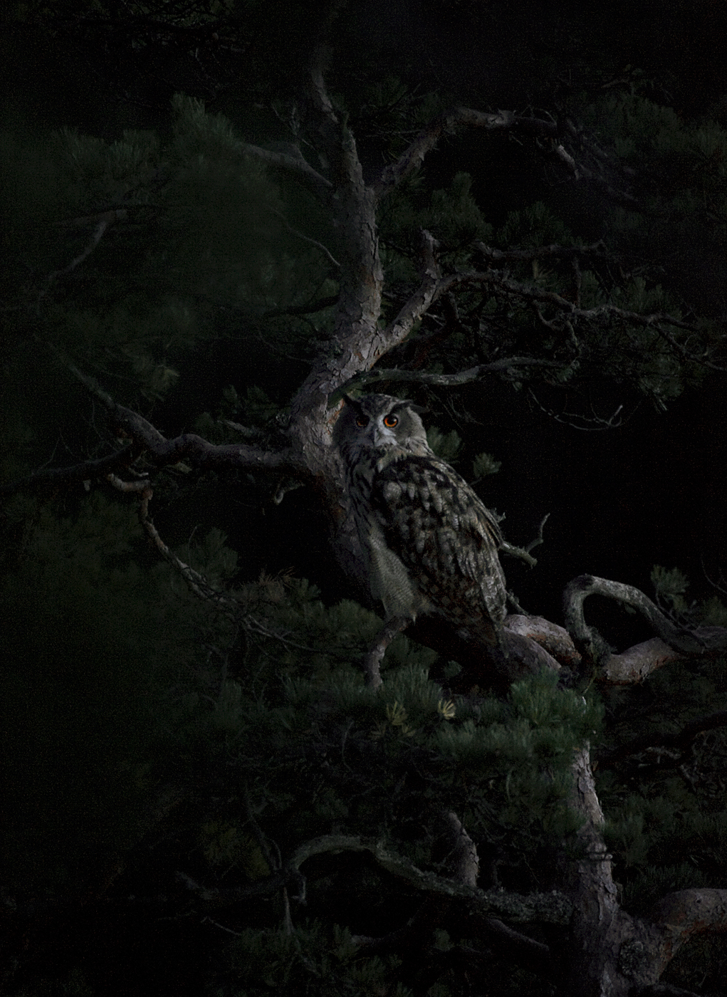 Eagle of Darkness